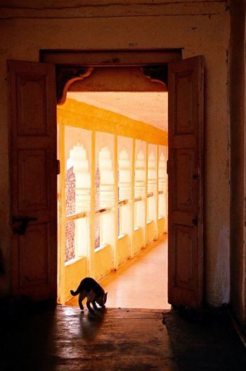 Through India 2008 Sunlight Cat India Anchient Architecture Tranquil Scene Orange Color Minolta Dynax 505si Analogue Photography Travel Photography Fresh On Eyeem  43 Golden Moments The City Light