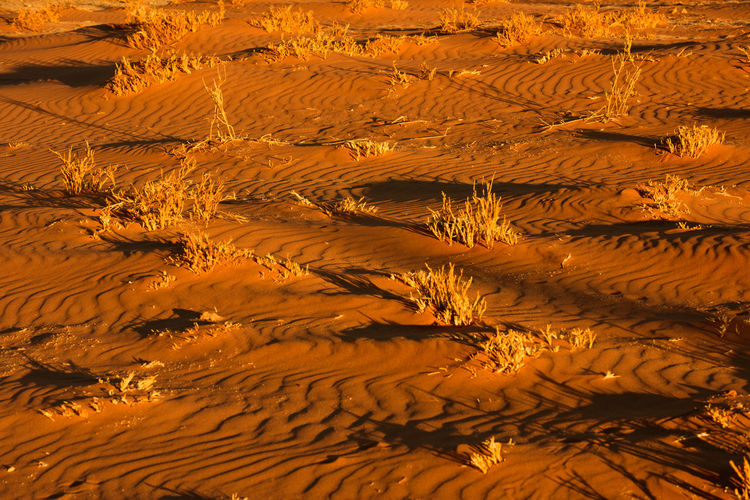 EyeEm Landscape Full Frame Grass Landscape Landscape Photography Landscape_Collection Landscape_photography Lines And Shapes Nature No People Orange Color Patterns In Nature Sand Shadows & Lights Tranquil Scene Wind Patterns On A Sand