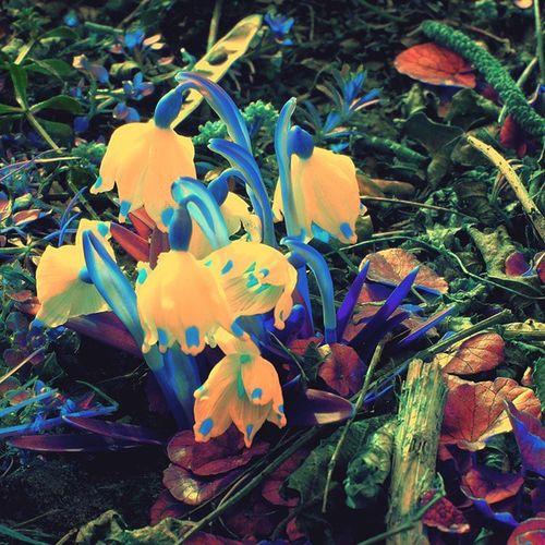 Unico fiore trovato al parco del Lura di Saronno Saronno Fiori Campanelle Lura Parco