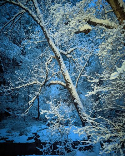 High angle view of snow covered plants