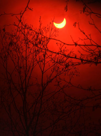 Partial solar eclipse in forest Sun Eclipse Astronomy Bare Tree Beauty In Nature Branch Creepy Forest Moon Nature Night No People Outdoors Partial Solar Eclipse Red Scenics Silhouette Sky Solar Eclipse Strange Tranquil Scene Tranquility Tree Woods