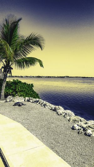 After the storm Florida Keys Ramrod Key Florida Beauty In Nature Sea Sunlight Clear Sky Day Sunset Sand