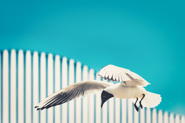 Low angle view of seagulls against the sky