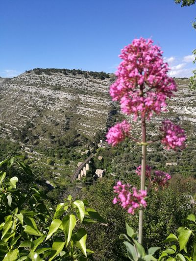 Bridge - Man Made Structure Bridge Train Flower Beauty In Nature Cavern Entrance Pink Color