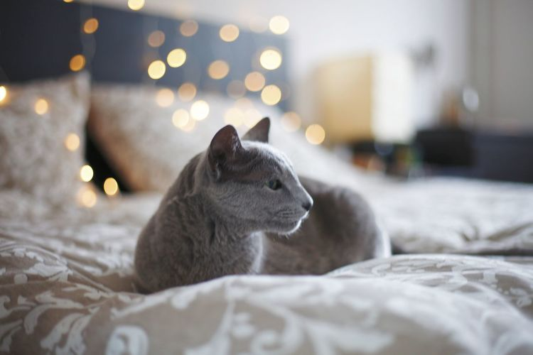 Close-up of cat lying on bed at home