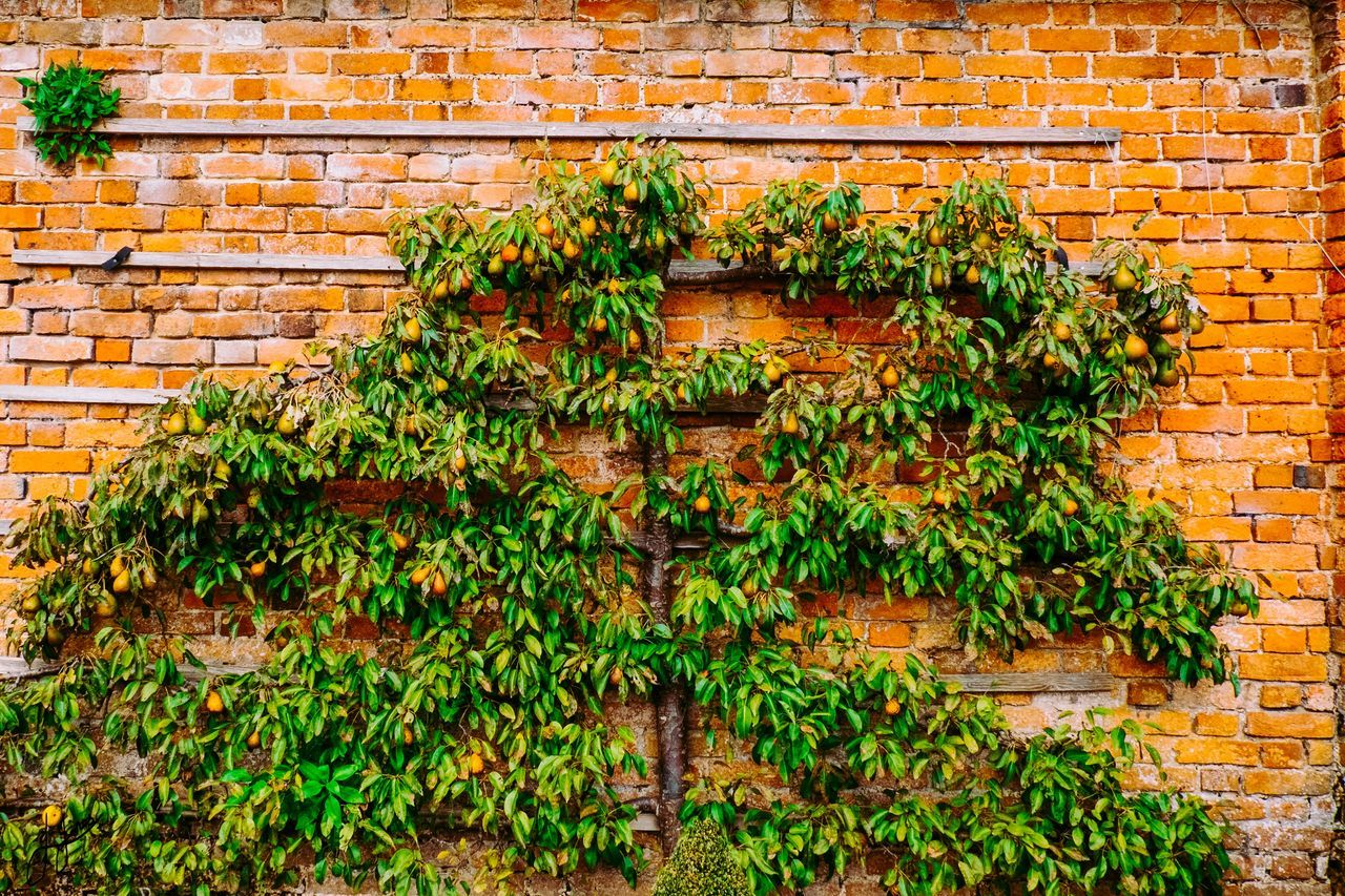 brick wall, plant, brick, wall, architecture, built structure, growth, wall - building feature, building exterior, green color, day, no people, nature, plant part, ivy, leaf, outdoors, food, food and drink, building, stone wall