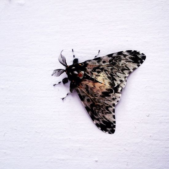 butterfly on the wall of my house 😊 Butterfly Insect Beetle Nature Vscocam VSCO Kupukupu INDONESIA Borneo