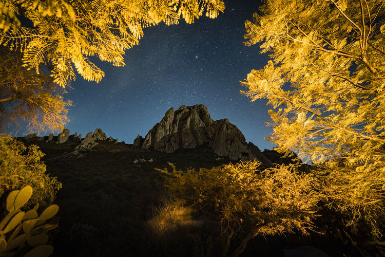Autumn trees against sky at night