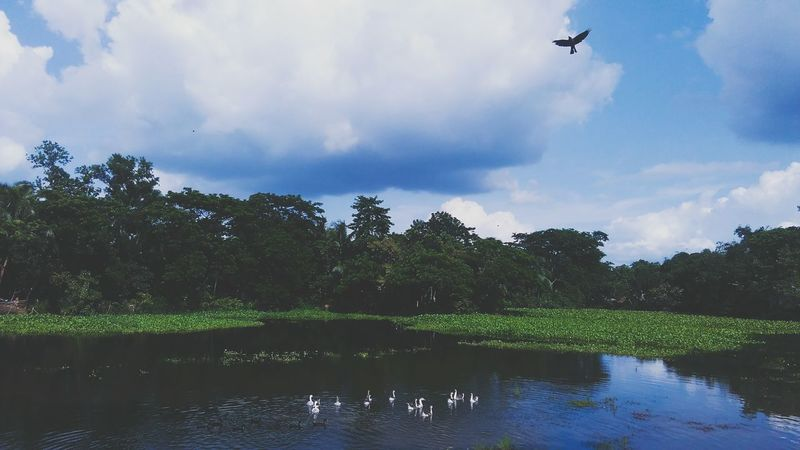 Flying Water Tree Sky Nature Village Life Comilla, Bangladesh
