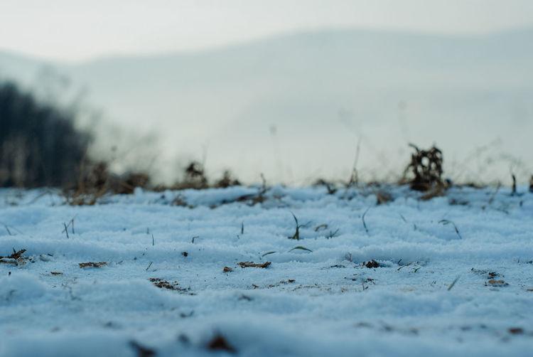 Close-up of snow on land