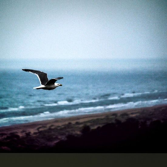 Freedom ! That what i want ! Free Soul Spirit Mind  Naturelovers Lifestyle Adventure Beauty Sea Horizon Picoftheday Fly Sky Clouds Beach Sand Morocco Marokko Loves_morocco Igmorocco Berkane Saidia Oujda
