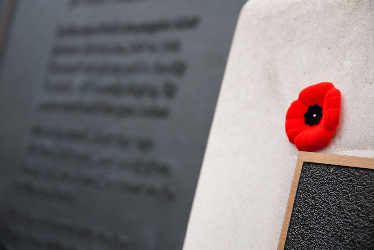 Close-up Death Flanders Fields Flower Memorial Poppy Red Remembrance