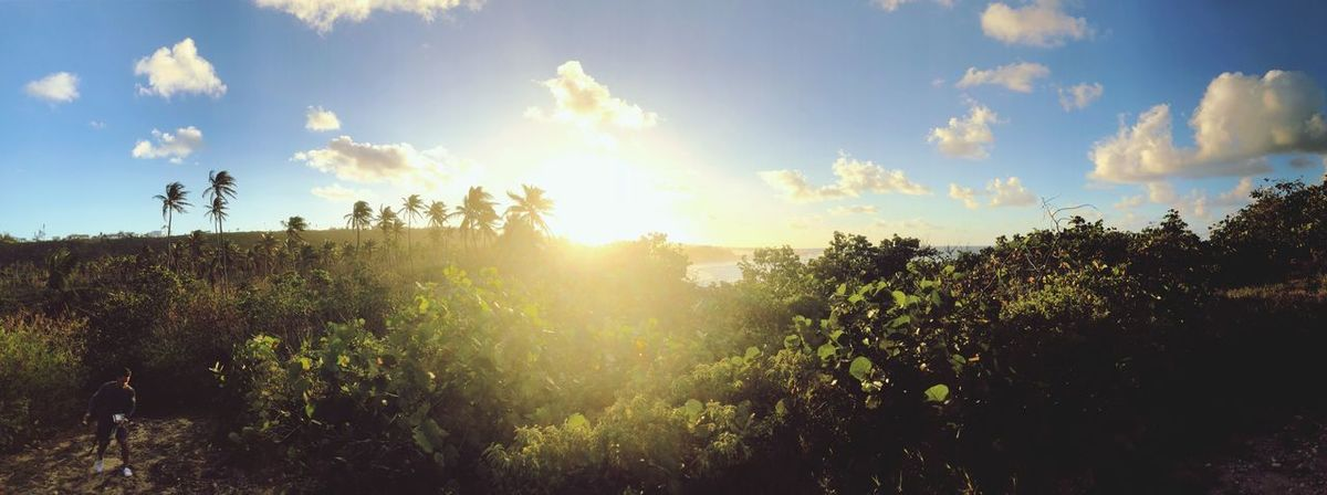 Pano Puerto Rico Puertoricotourism Sky Tree Plant Sunlight Cloud - Sky Nature Go Higher Beauty In Nature Tranquility Sun Sunbeam Tranquil Scene Growth Lens Flare No People Outdoors Non-urban Scene Scenics - Nature Day Land Sunny