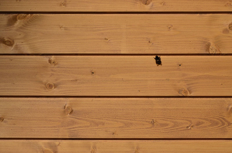 Full frame shot of insect on wooden planks