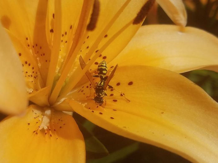 Insect Flower