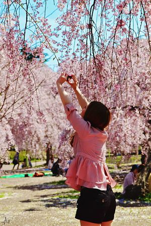 Sendai Japan - Cherry Blossoms Cherry Tree Japanese Culture Trees Pink Lady Pink!