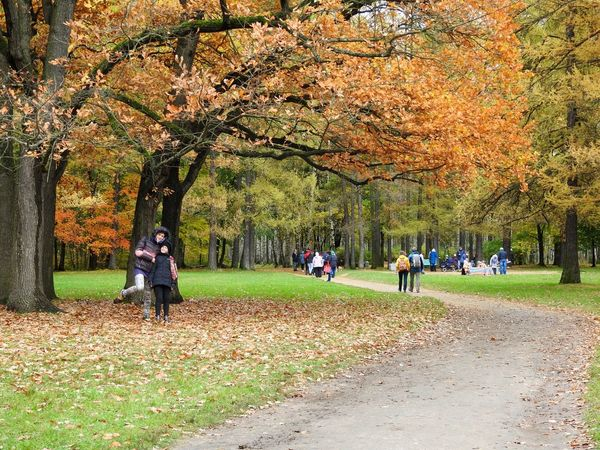 Tree Real People Nature Outdoors Daughter Wifey♡ Day People Beauty In Nature Large Group Of People Perspectives On Nature Park Tree Area Sunny Day 🌞 Leaf🍂 Freshness Autumn🍁🍁🍁 EyeEmNewHere Autumn Colors Of Sankt-Peterburg Colors Of Autumn Sankt-Petersburg Russia