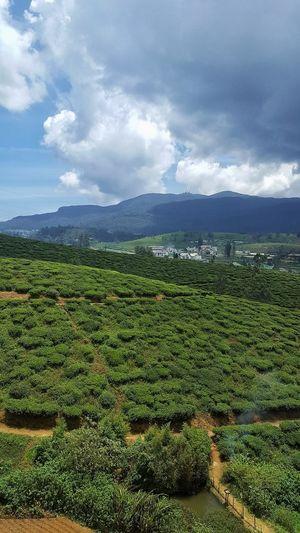 """Para disfrutar del té, debemos tener todos nuestros sentidos en el presente. Sólo entonces nuestras manos sienten la agradable calidez de la taza y percibimos el aroma, saboreamos la dulzura y apreciamos la delicadeza del té. Si le damos vueltas al pasado o nos preocupamos por el futuro, nos perdemos la experiencia de disfrutar esa taza de té. Miraremos la taza y el té ya habrá desaparecido. Lo mismo ocurre con la vida.""""Meditación"""" (2002),Brian Weiss Tea Plantation  Tea Is Healthy Nature Photography EyeEm Nature Lover EyeEmNewHere Nuwaraeliya Sri Lanka Tea Crop Irrigation Equipment Rural Scene Water Agriculture Plantation Cultivated Cultivated Land Agricultural Equipment"""