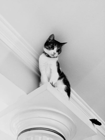 Black And White IPhoneography Blackandwhite Domestic Domestic Animals Pets Mammal One Animal Cat Vertebrate Indoors  No People Domestic Cat High Angle View