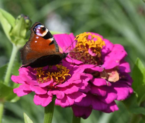 Blütenpracht Schmetterling Blüte Blütenstaub Iga
