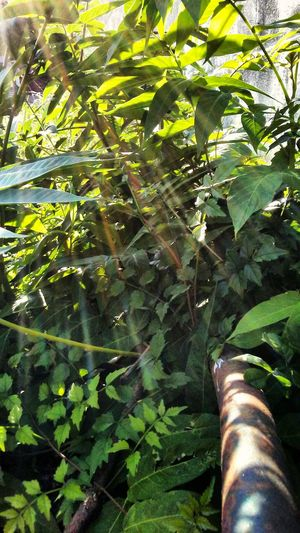 Urban Nature No People Green Color Leaf Beauty In Nature Sunray Of Light Outdoors Growth
