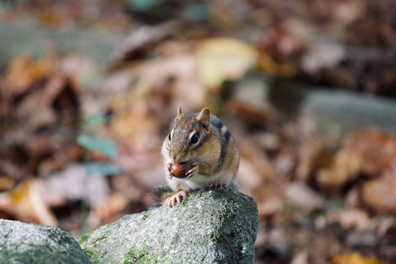 Close-up of squirrel on rock
