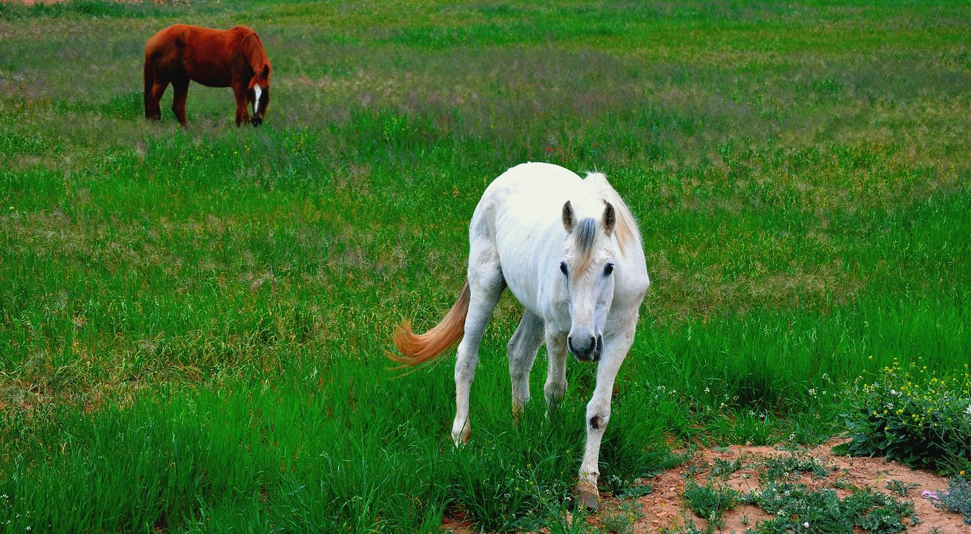 Horses Nature Spring Into Spring Green Oujda Morocco Spring Beautiful Great Morocco