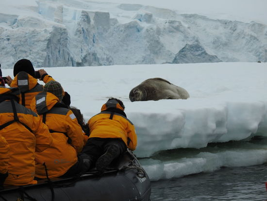 Group of tourists taking pictures of a seal resting on an iceberg. Antarctic Peninsula. Animal Themes Animal Wildlife Animals In The Wild Antarctic Peninsula Boat Iceberg Leopard Seal Mountain Background Nature Outdoors People Photoshoot Seal Tourists Zodiac Photography