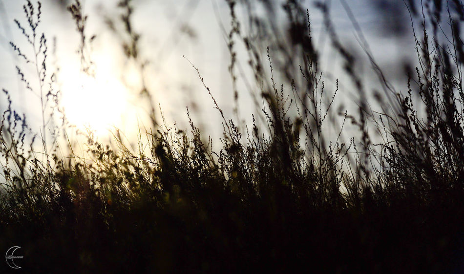 Nature Grass Light Sunlight Sun трава No People Backgrounds Light And Shadow Light And Shadows