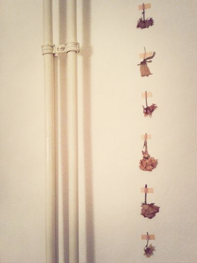 lines. Les Fleurs Du Mal Dead Flowers Home Sweet Home