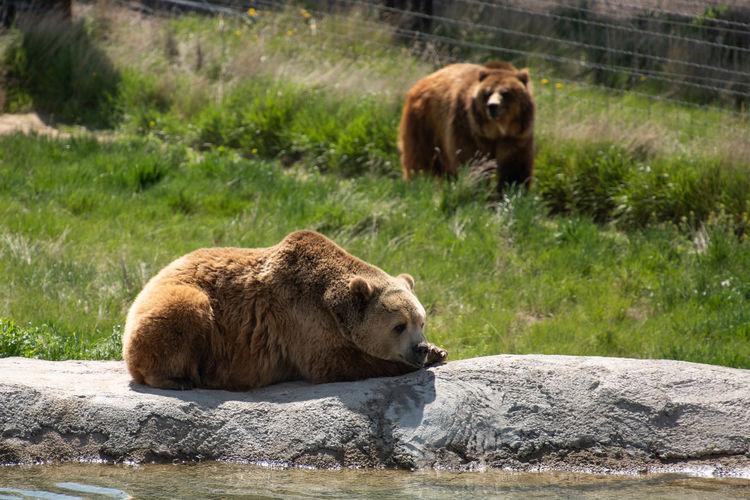 Animal Animal Family Animal Themes Animal Wildlife Bear Group Of Animals Mammal Nature Outdoors