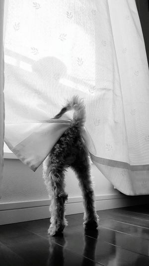 I wanna go outside One Animal Animal Themes Domestic Animals Pets Window Indoors  Transparent Day Animal Full Length Blackandwhite Monochromatic Black And White