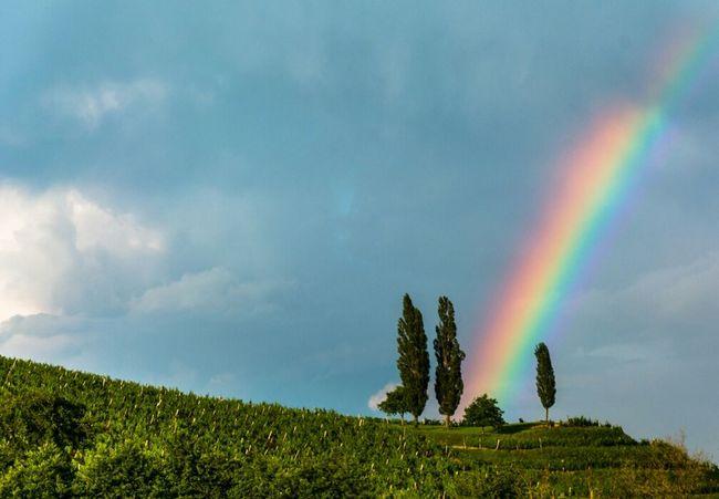 Rainbow Rainbow Colorful Pallete Spectrum Nature Rain Summer Beautiful Adventure Amazing