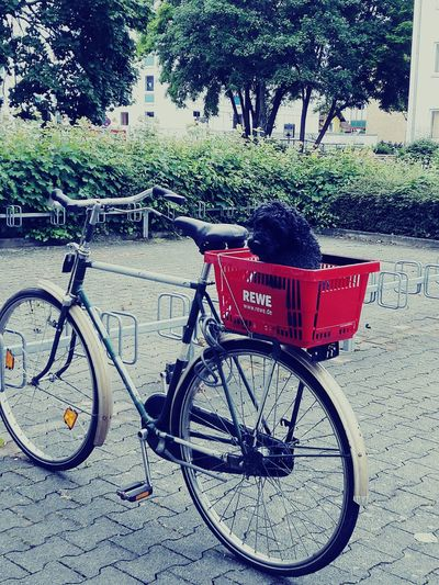 a bicycle, a