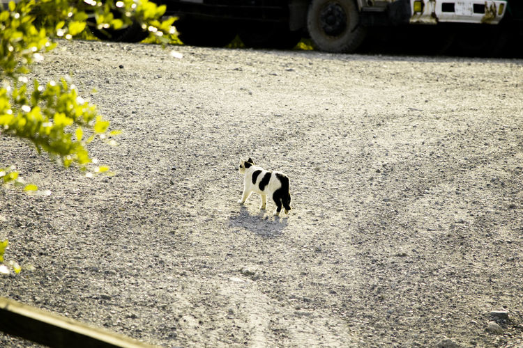 Black Color Cat Day Domestic Animals Ground Mammal Nature No People Outdoors Pets Road Selective Focus 白黒猫