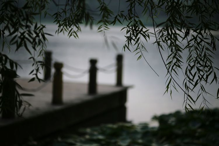 The Purist (no Edit, No Filter) EyeEm Nature Lover Park At The Park Lakeside Hugging A Tree Leaves Water Reflections Carl Zeiss Hefei
