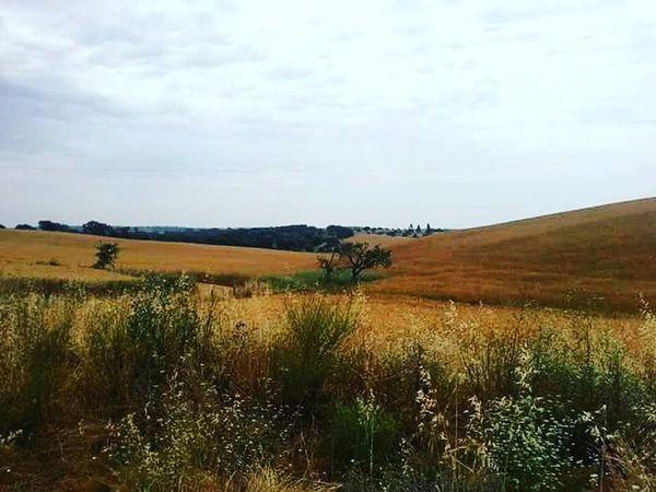 Alentejo Landscapes