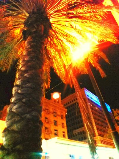PalmsTrees Palmporn Night Photography City Lights Cityscapes Longbeach California EyesAreTheWindowToTheSoul Glitch Shine Brighr Like A Dimond Brightlights Beautiful Nature Walking Around The City  Citynature EyeEm Nature Lover Lovemyeyemfriends Light And Shadow Sunset #sun #clouds #skylovers #sky #nature #beautifulinnature #naturalbeauty #photography #landscape Sightseeing Learn & Shoot: Single Light Source TreePorn Cellphone Photography Light Up Your Life Capture The Moment What Eye See  Gettyimagesgallery