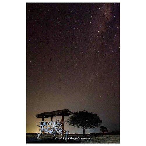 Baluran by night Balurannationalpark Eastjava Milkyway INDONESIA 1000kata Natgeotravel Nationalgeographic Asiangeographic Nightphotography Instalike Instagram Instagood Instadaily Photooftheday
