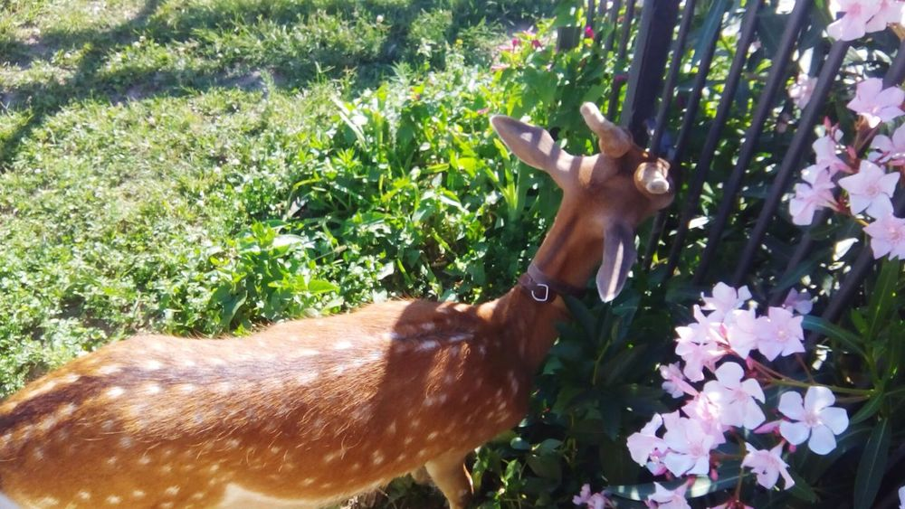 Fawn among the flowers Animals In Captivity Fawn Fawn Lying In The Grass Fawn😍 Animal Themes Animal Photography Flower Pets Plant Plant Life