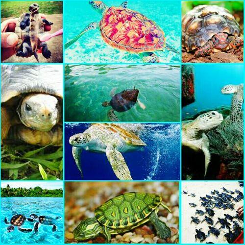 Tartarugas ❤ , se alguém quiser me doar uma eu aceito! I ♥ Turtles  Mypassion♥