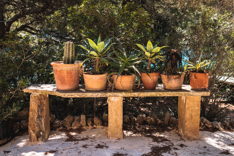 Plant Nature Growth Day Tree No People Potted Plant Outdoors Wood - Material Group Of Objects Container Flower Pot Beauty In Nature Large Group Of Objects Gardening Pottery Variation Choice In A Row Dirt Flowers Pot Plant
