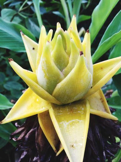 Growth Plant Beauty In Nature Close-up Freshness Flowering Plant Flower Vulnerability  Yellow