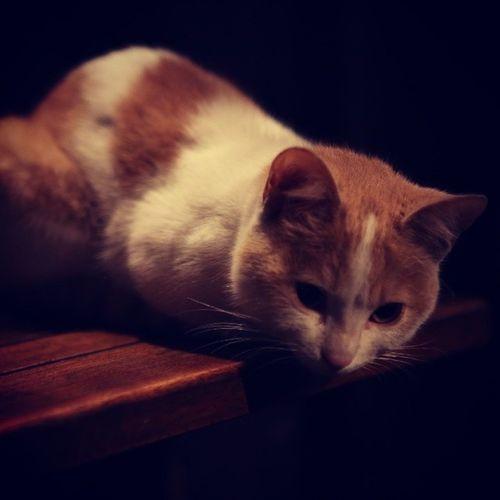 Kedidir kedi Cat Kedi Hurriyetdunyasi nın en tatlı Kedisi