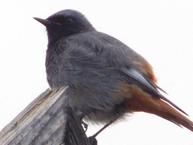 Ballance Bird In My Garden Showcase May Week On Eyeem