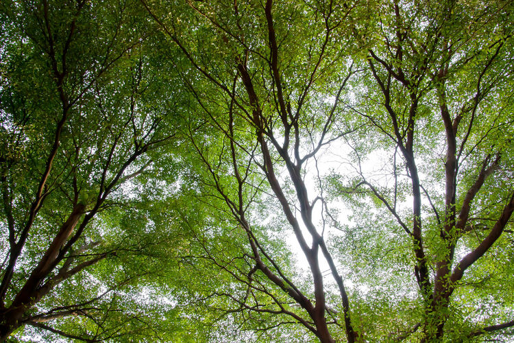 Backgrounds Bamboo - Plant Beauty In Nature Branch Day Forest Full Frame Green Color Growth Land Low Angle View Nature No People Non-urban Scene Outdoors Plant Rainforest Tranquility Tree Tree Canopy  Tree Trunk Trunk WoodLand