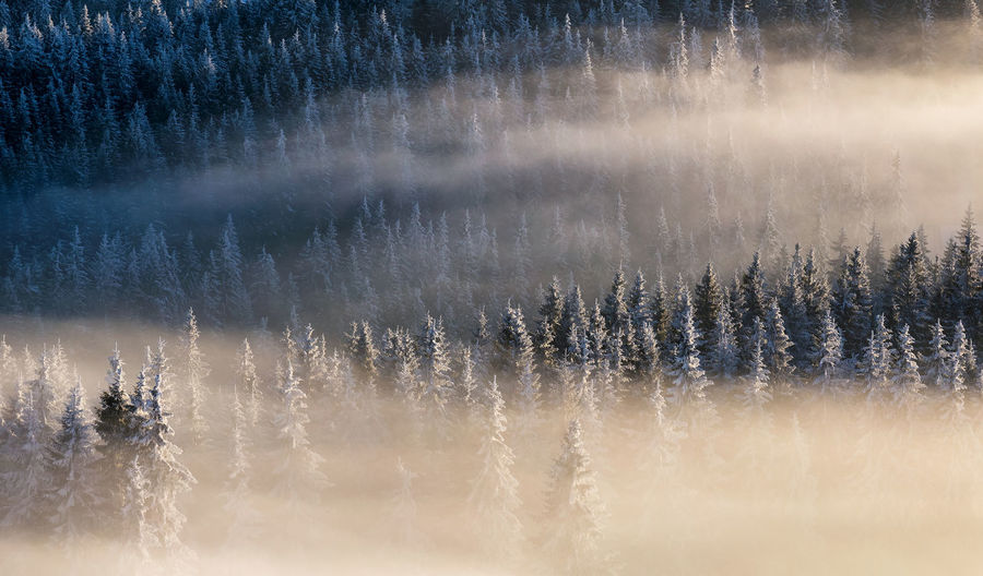 Lost in the forest , Rodnei Mountains Beauty In Nature Day Fog Foggy Foggy Morning Forest Mountain Nature No People Outdoors Rodnei_mountains Scenics Tranquil Scene Tranquility Tree