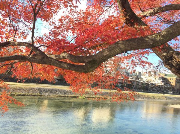 Kyoto City Kyoto Autumn Kyoto Japan Kyoto Autumn Leafs