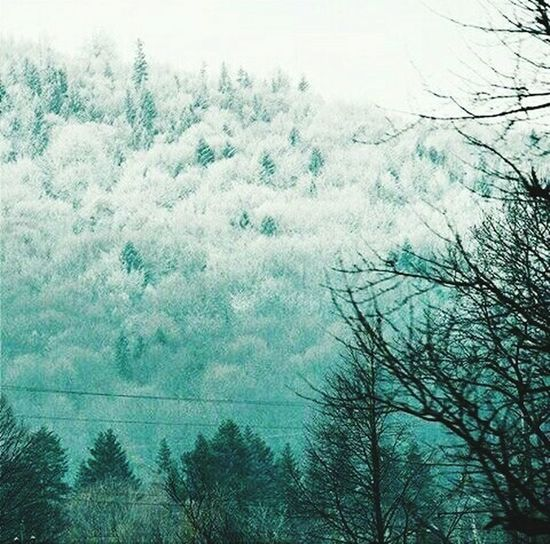 Wildlife Winter Backgrounds Outdoors Mountain Snow ❄