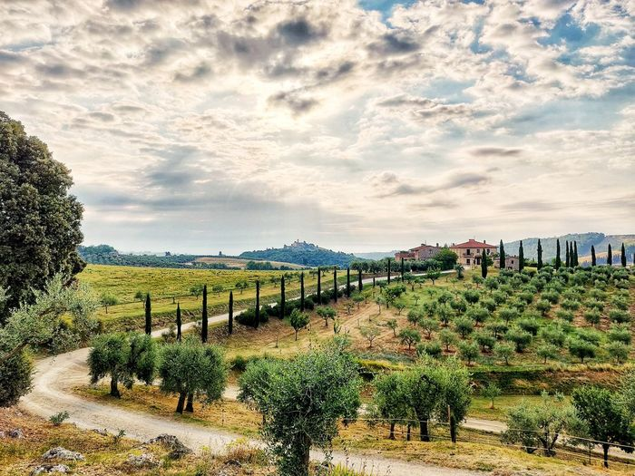 Tuscany Landscapes Tuscany Tuscany Countryside Italy Toscana Agriculture Pattern Sky Cloud - Sky Vineyard Vine Grape Vine - Plant Cultivated Land Winemaking Agricultural Field Crop